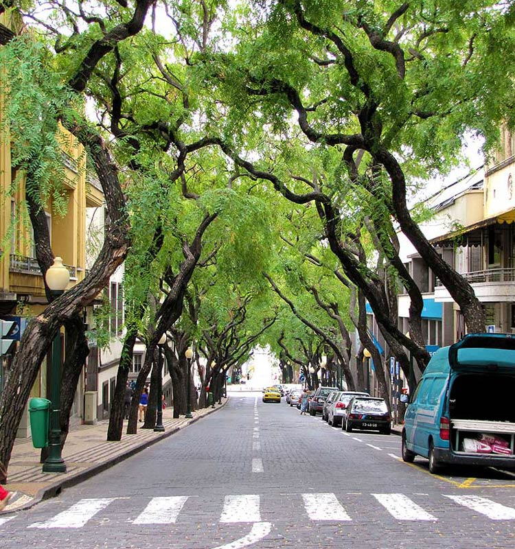 Funchal Madeira street with trees
