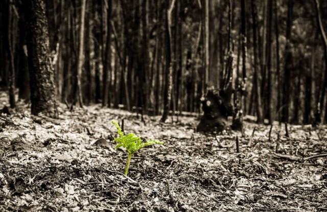 madeira branden plantje