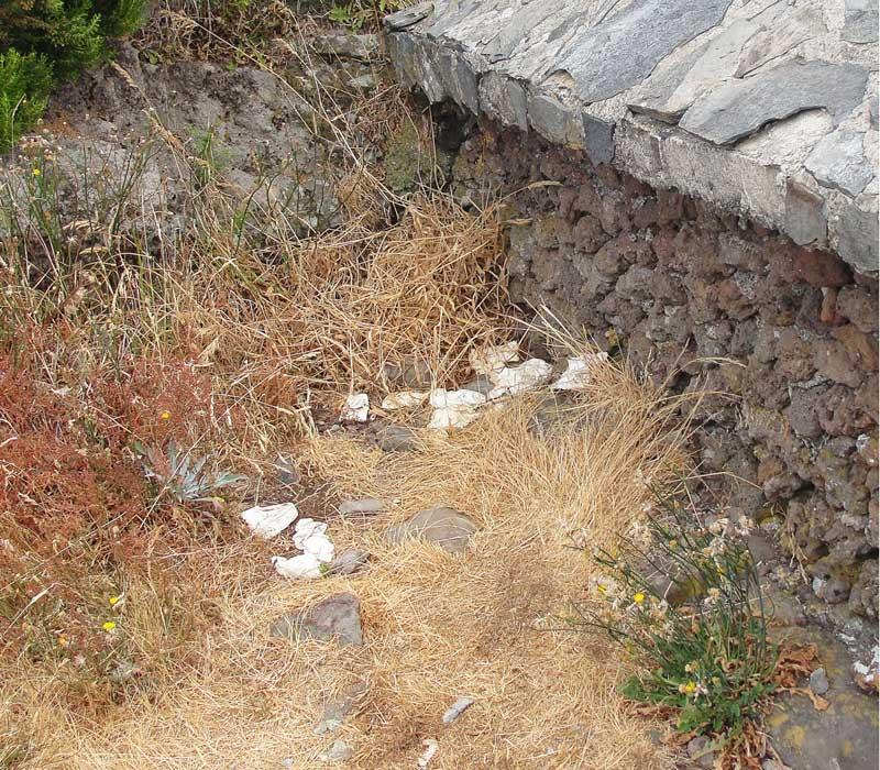clean Madeira white tissues along levada walk