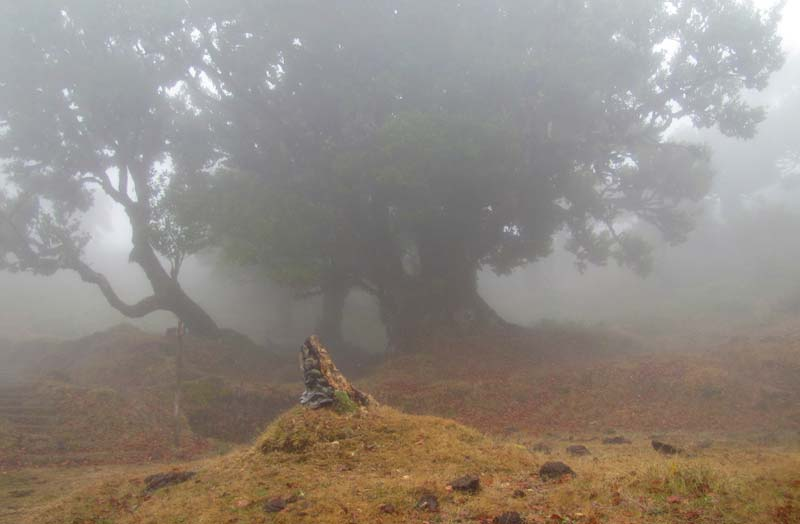 walking in the mist at fanal