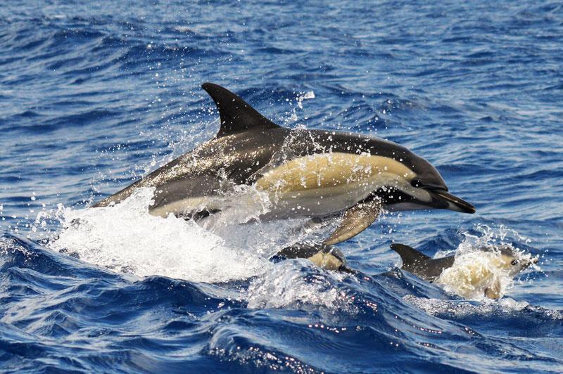 dolfijnen Madeira moeder met jong