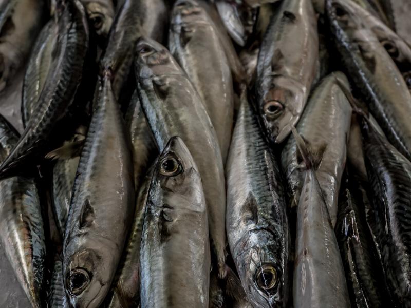 mercado dos lavradores fish sardines