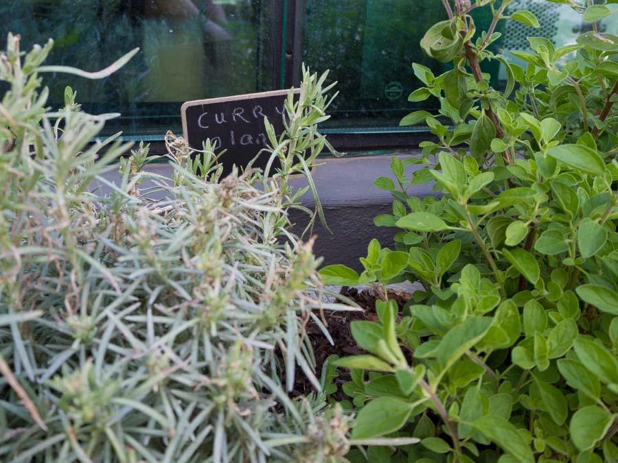 greenhouse coffee roaster monte kruiden