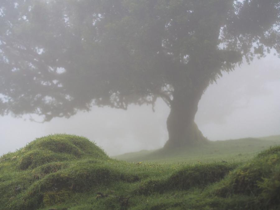 Fanal Madeira